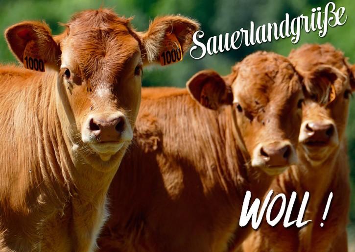 Sauerland 2507