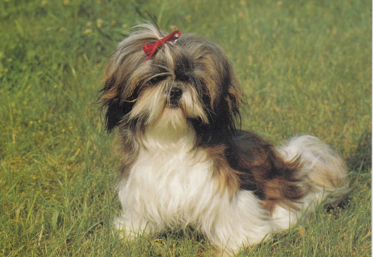 Tierpostkarte Hunde 102-1