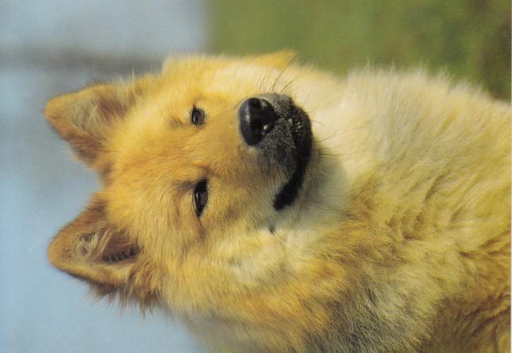 Tierpostkarte Hunde 102-3