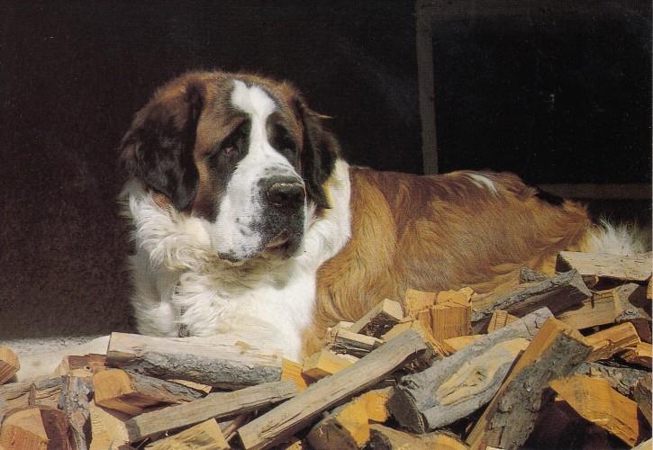 Tierpostkarte Hunde 102-5