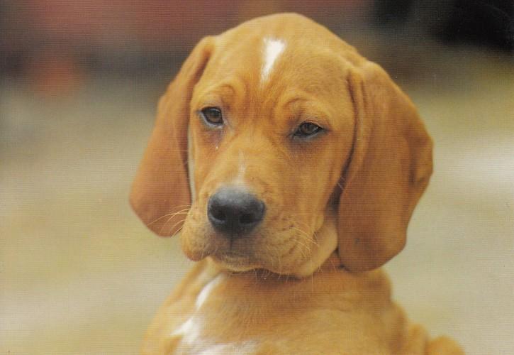 Tierpostkarte Hunde 102-7