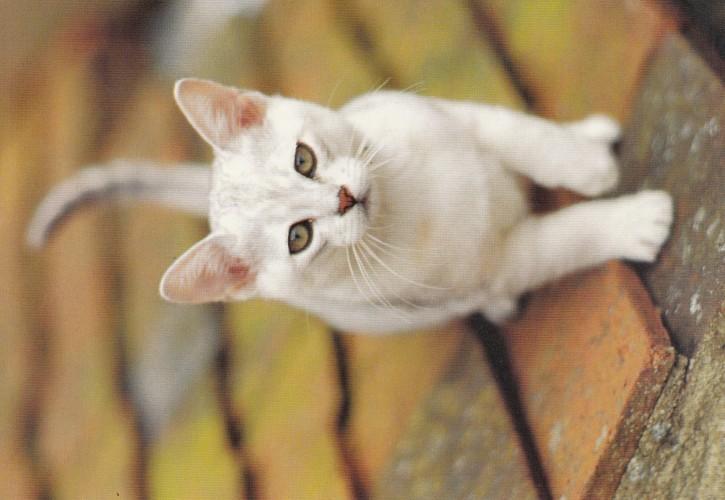 Tierpostkarte Katzen 102-1