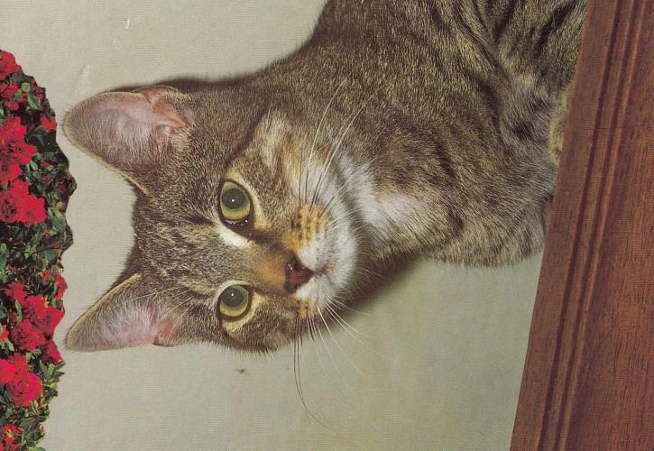 Tierpostkarte Katzen 102-2
