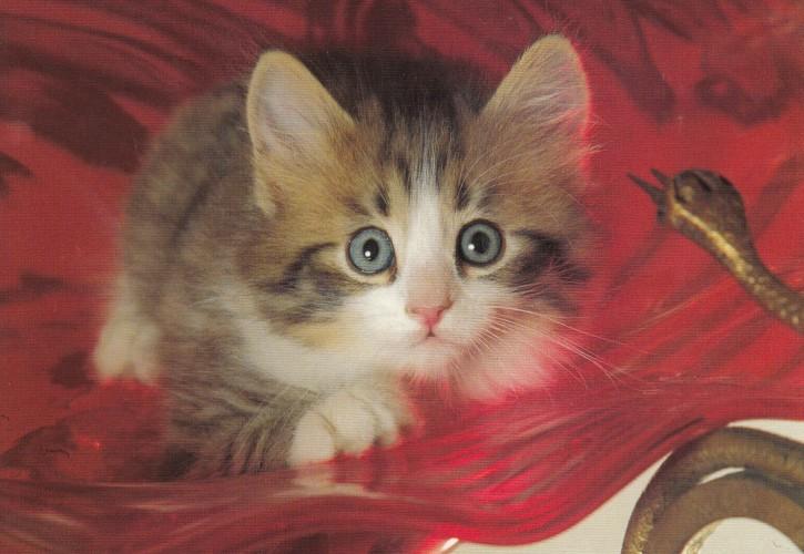 Tierpostkarte Katzen 102-3