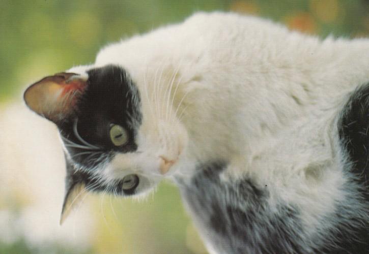 Tierpostkarte Katzen 102-4