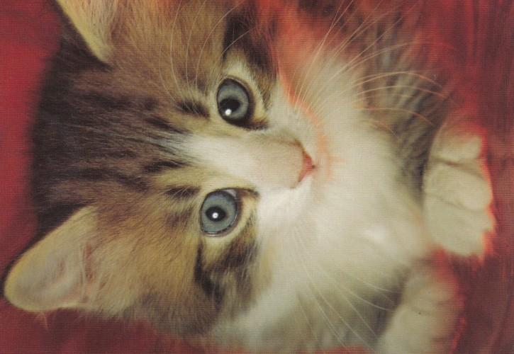 Tierpostkarte Katzen 102-5