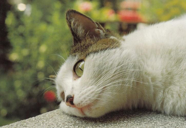 Tierpostkarte Katzen 102-6
