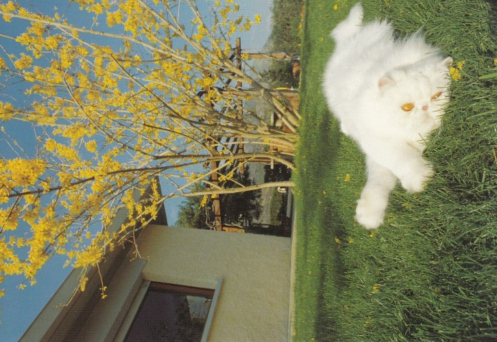Tierpostkarte Katzen 102-7