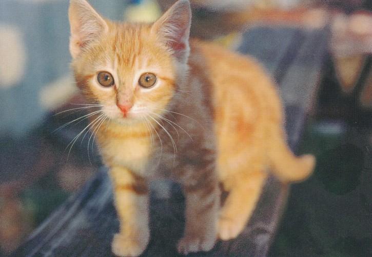 Tierpostkarte Katzen 104-1