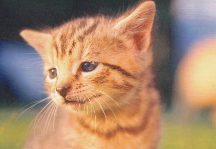 Tierpostkarte Katzen 104-2