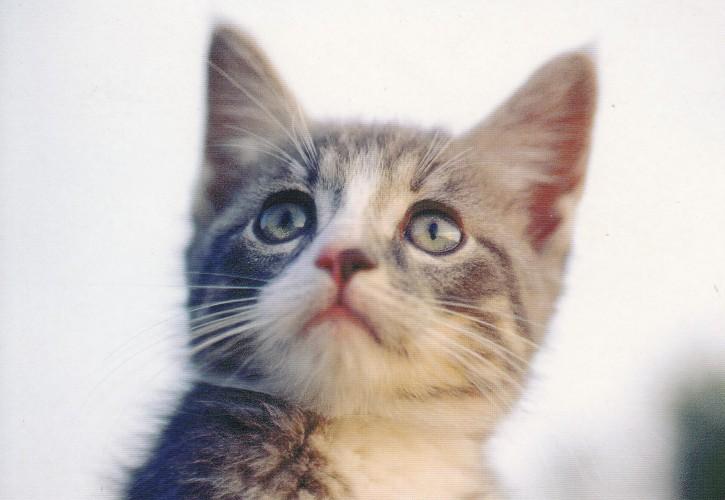 Tierpostkarte Katzen 104-3