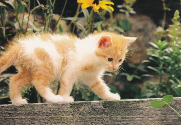 Tierpostkarte Katzen 104-4