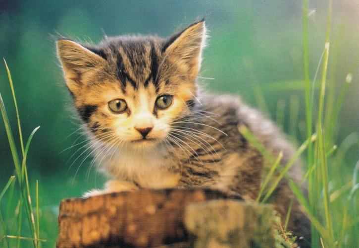 Tierpostkarte Katzen 104-5