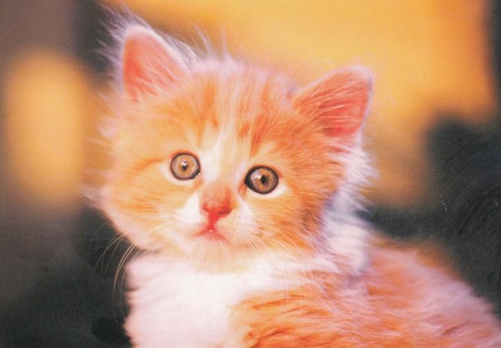 Tierpostkarte Katzen 105-1