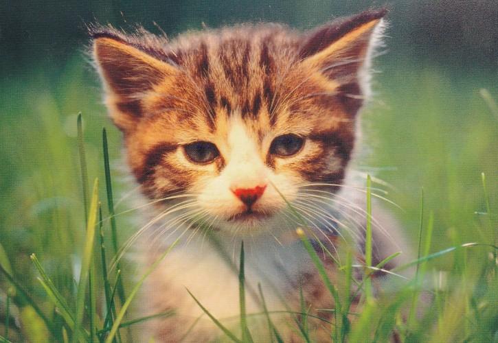Tierpostkarte Katzen 105-2