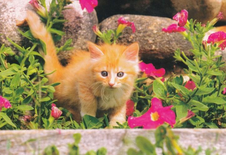 Tierpostkarte Katzen 105-3