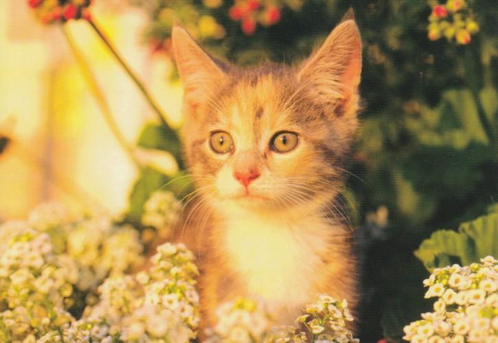 Tierpostkarte Katzen 105-4