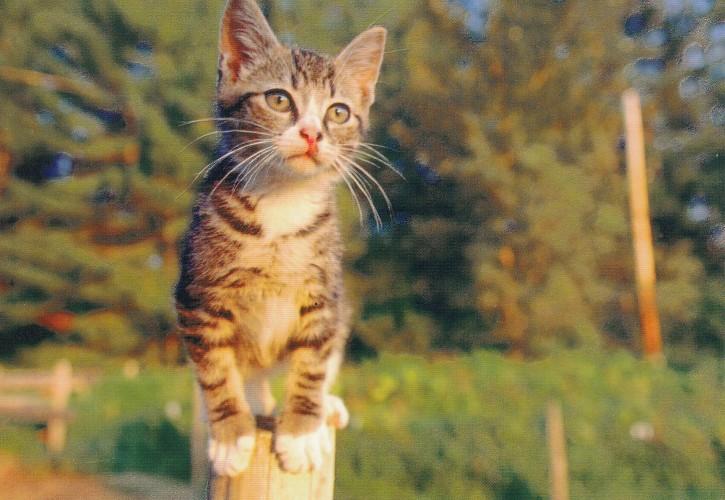 Tierpostkarte Katzen 105-5