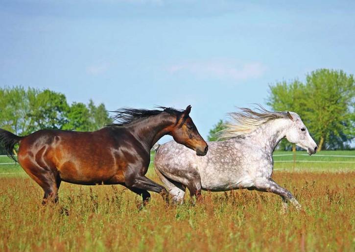 Tierpostkarte Pferde PPK-23
