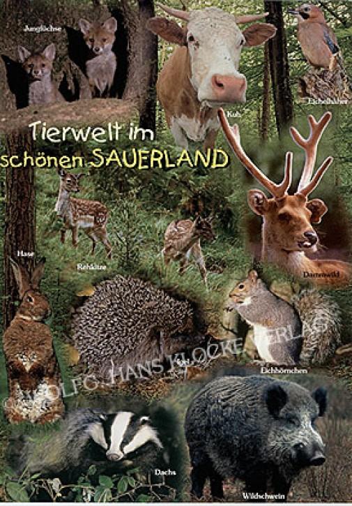 Sauerland 2501